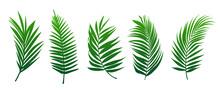 Beautiful Palm Tree Leaf Set Green Background Vector Illustration 2.