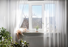 Window With White Tulle And Sleeping Cat On Windowsill