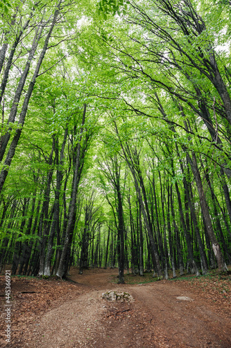 green deciduous forest and road landscape travel