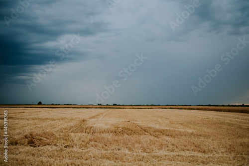 Fotografie, Obraz Beautiful thick hayfield in the middle of the countryside under a dark cloudy sk