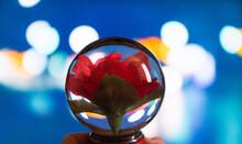 Flor En Cristal