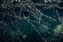 Closeup Shot Of Bush Branches At Billy Frank Jr. Nisqually National Wildlife Refuge