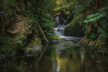 Willoughby Waterfalls And Streams Of The Quinault Rainforest With Lush Ferns And Moss