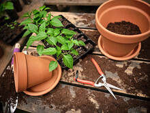 Seedling Tray Amidst Flower Pots And Work Tools On Messy Table With Soil At Garden