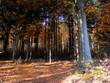 canvas print picture - Bunte Blaetter verschoenern den Herbst.  Colorful leaves brighten up the autumn.