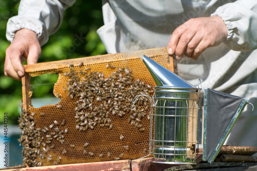 The beekeeper inspects the honey hive Fotobehang