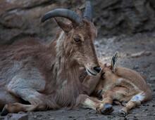 Description.Prague Zoo.Mother And Child.