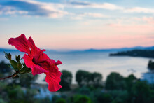 Selective Focus Shot Of A Red Hibiscus On A Greek Island During Sunset