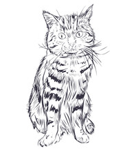 Cat Sketch Isolated On White Background. Tomcat Sitting And Watching. Domestic Pet