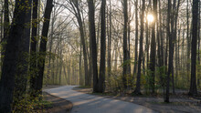 Spring Forest And Road At Dawn, Warren Dunes State Park, Michigan