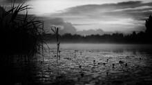 Wonderful Misty Midsummer Evening With River, Yellow Water Lilies, Young Green Reeds And Red Blurry Clouds. Fog Over Water In Latvia. Black And White Dark Obscure Version