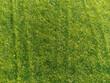 Luftaufnahme eines Rasen im Sommer