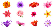 Realistic Various Colorful Flower Set Vector Illustration. Set Of 12 Flowers