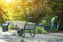 Garden Wheelbarrow With Leaves Or Cleaning City Park In Spring At Sunny Day