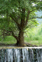 Árbol Creciendo Justo Al Borde De Una Cascada.