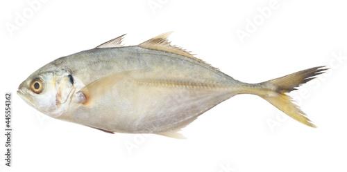 Fototapeta Fresh yellowtail scad isolated on white background