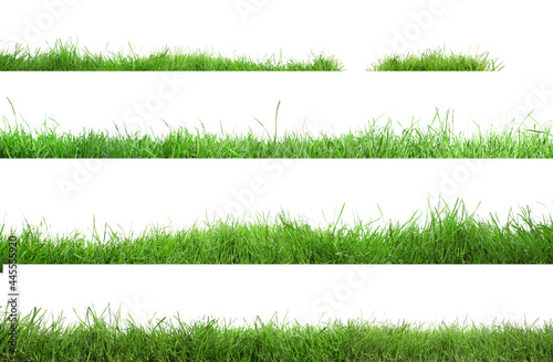Beautiful lush green grass on white background, collage