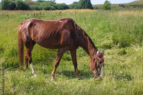 Obraz na plátně a horse eats grass on the lawn