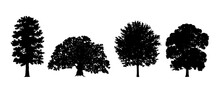 Tree Set. Different Tree Silhouette. Oak, Deciduous. Isolated On White Background. Vector Illustration. Forest And Park Elements. Deciduous Trees. Nature Collection. Black Illustration.