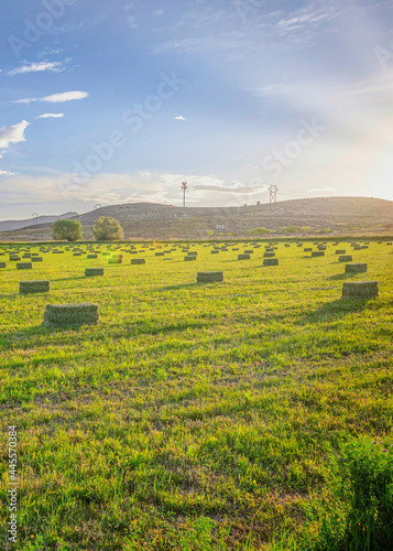 Vertical Utah Valley agricultural landscape of farmland with vibrant green pasture