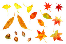 A Set Of Vector Image Of Autumn Leaves And Acorns