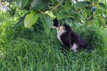 Un Gato De Tonos Negros Y Blancos En Un Pasto Con Arboles Y Plantas De Hojas Verdes