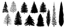Tree Set. Pine Evergreen Trees Silhouette. Vector Black Illustration. Forest And Park Elements. Winter Forest Set. Isolated On White Background. Nature Collection. Black Hand Drawing Illustration.