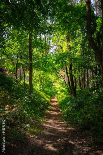 Ścieżka w lesie oświetlona słońcem
