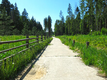 Summer Road Through The Forest With A Vintage Wooden Rough Fence