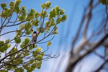 Pássaro Na árvore Com Céu Azul De Fundo