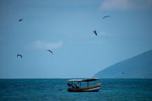 Barcos, Pássaros E Mar