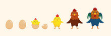 Hatching A Chick From An Egg. Yellow.  Egg Shell. The Hen And The Rooster. Vector Illustration.