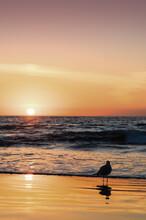 Bird At The Beach Watching Sunset