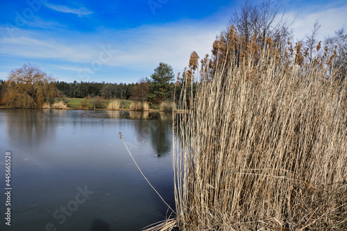Obraz na plátně A partially frozen lake with sedge on the shore against a blue sky
