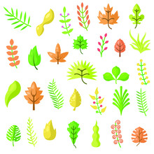 Set Abstract Collection Flat Cartoon  Different Color Red Yellow Green Orange Leaf Leaves With Berries Nature Autumn Concept Vector Design Style Elements With Shadows