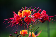 Flower Of Many Colors And Flowers.