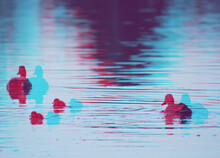 Ducks On A Lake. Glitch Abstract Photo Of Ducks And Rippling Water.