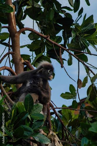 Fototapeta premium monkey with her adorable baby