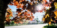 Maple Tree With Bright Yellow And Red Leaves And Sun Light Through Foliage