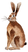 Forest Hare Watercolor Illustration. Template For Decorating Designs And Illustrations.