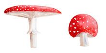 Pair Of Mushrooms Amanita Watercolor Set. Template For Decorating Designs And Illustrations.