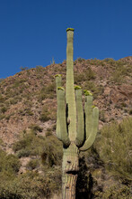 Saguaro That Looks Like It Has A Face