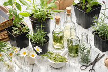 Making Oil Or Infusion From Home Grown Medicinal Plants. Bottles Of Essential Oil Or Infusion Of Medicinal Herbs, Healthy Plants For Healing And Cooking In Pots - Sage, Rosemary, Lavender, Mint, Daisy