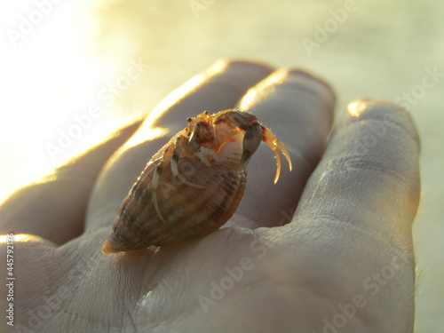 Fotomural hermit crab on the beach