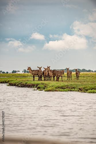 Botswana, Reise, Safari