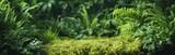 Green fern leaf texture, nature background, tropical leaf