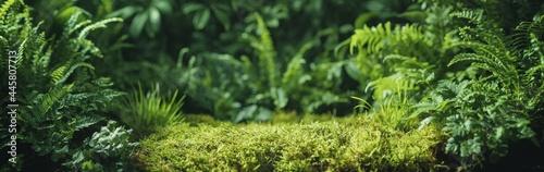 Slika na platnu Green fern leaf texture, nature background, tropical leaf