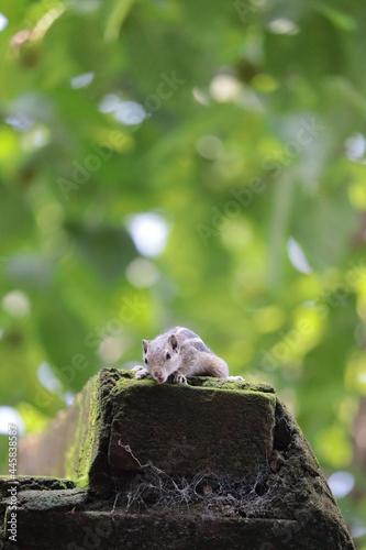 Fototapeta premium squirrel on a tree