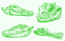Graphical Color Set Of Green Skulls Of Crocodile, Vector Color Elements