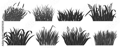 Photo Green grass vector black set icon